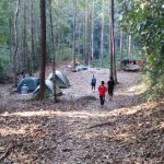Tips masuk hutan